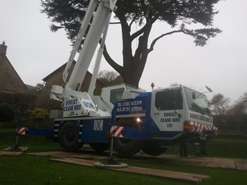 Access to large tree lift overcome
